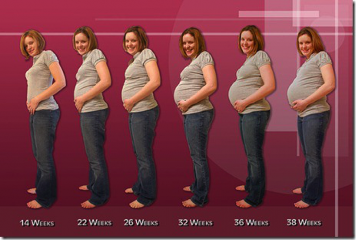 during-pregnancy-pregnancy-by-trimester-2